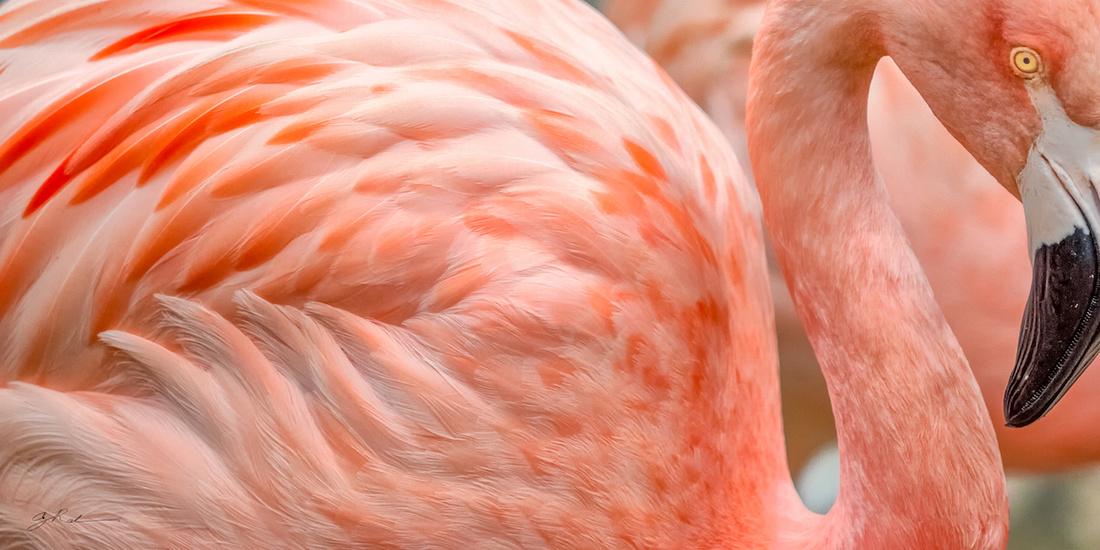 Flamingo Flow Image